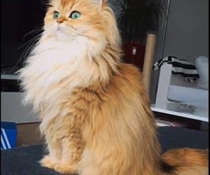 gif and gif cat image
