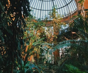 greenhouse, plants, and lovely image