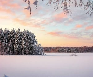 cold, forest, and pastel image