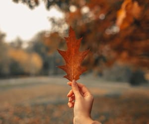 autumn, cloudy, and fall image