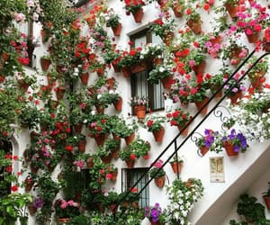colors, nature, and flores image