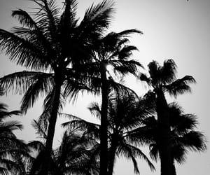 fuerteventura, summer, and vacation image