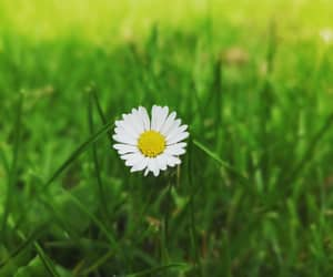daisy, green, and life image