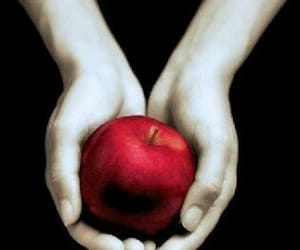 apple, now, and red image