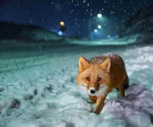 fox, night, and snow image