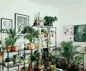 interior design, pictures, and plants image