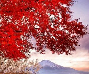 autumn, japan, and 日本 image