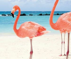 beach, flamingo, and animal image