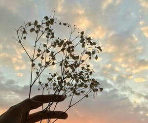 flower, hand, and sky image