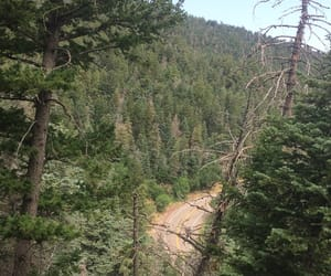 forest, sandia, and mountain image