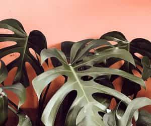 pink, lockscreen, and plant image