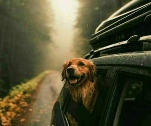 dog, travel, and autumn image