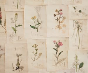 flowers, vintage, and draw image