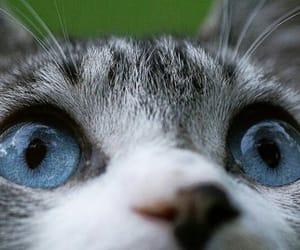 Animales, animals, and gato image