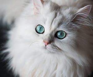 Animales, gato, and mirada image