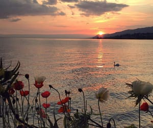 nature, flowers, and sea image