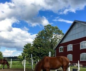 animal, beautiful, and sky image