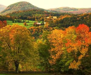 autumn colors, forest, and landscape photography image