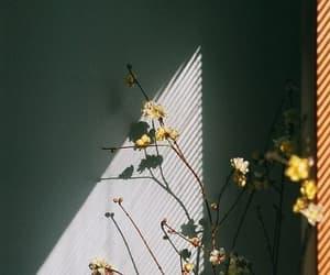 flowers, vintage, and light image