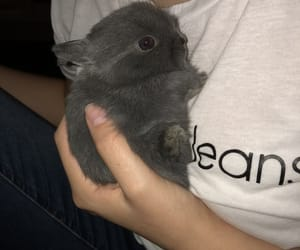adorable, baby, and bunnies image