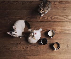 cat, kitten, and aesthetics image