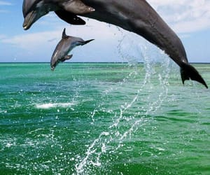 dolphins, green water, and 💚 image