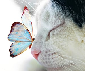 butterfly, cat, and kitty image