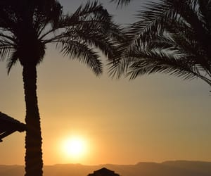 evening, palm, and sea image