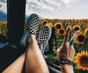 flowers, sunflower, and travel image