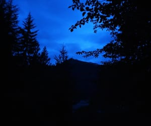 blue, leaves, and forest image