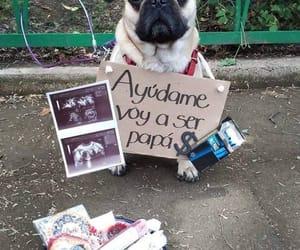 dog, ayuda, and papa image