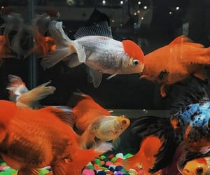 animals, colors, and fish image