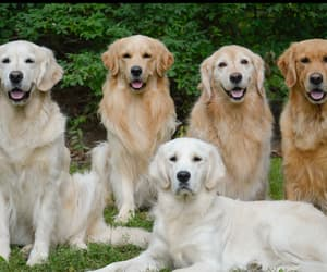animals, dog, and dogs image