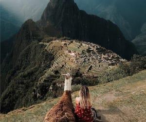 beautiful, llama, and machu image