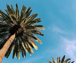 background, palm, and sky image