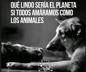 Animales, blanco y negro, and frases image