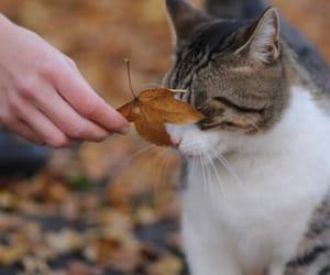 autumn, beautiful, and cat image