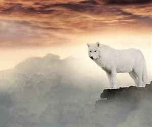 animal, freedom, and leader image