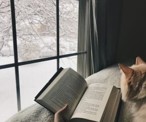 book, winter, and cat image
