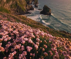 beach, pink, and flowers image