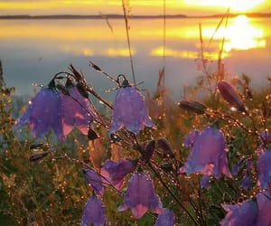 flower, nature, and sunset image