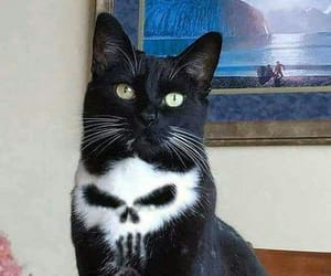 cat and skull image