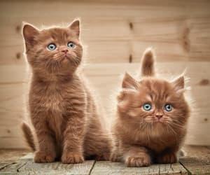 cat, بزونه, and قطط image