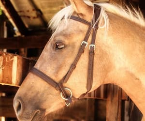 animals, country, and horses image