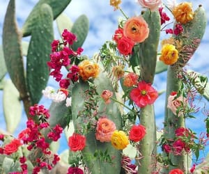 cactus, roses, and colors image