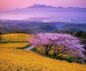 flowers, japan, and mountains image