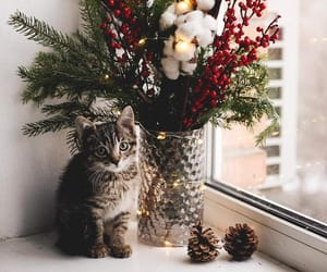 decoration, garland, and kitten image