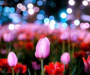 light, hermosa+smukke, and fiori+rosor+blumen image