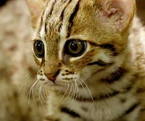 animals, kitten, and sweet image
