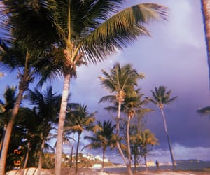 clouds, follow, and palmtree image